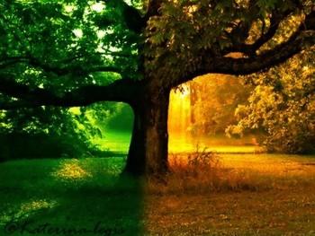 89 1 350x263 - Ağaç Falı