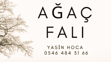Photo of Ağaç Falı