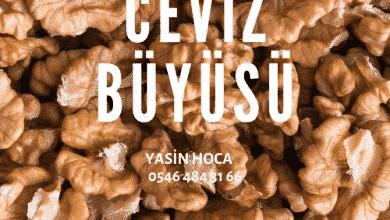 Photo of Ceviz Büyüsü